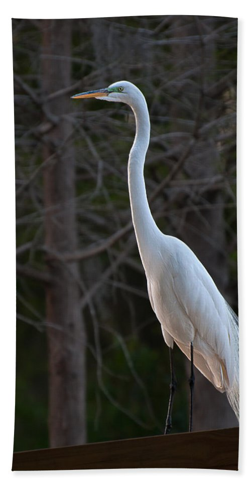 Great Hand Towel featuring the photograph Evening Egret 2 Vertical by Photos By Cassandra
