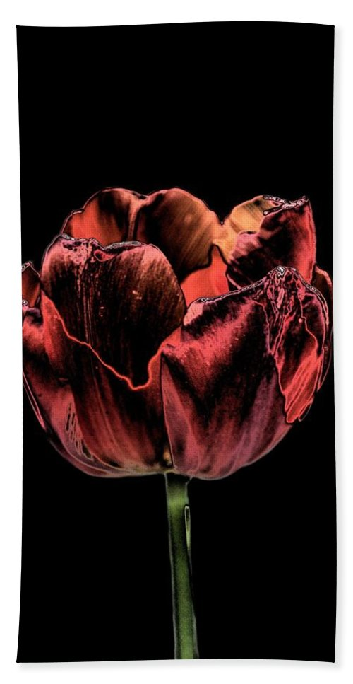 Evening Red Hand Towel featuring the photograph Evening Red by Maria Urso