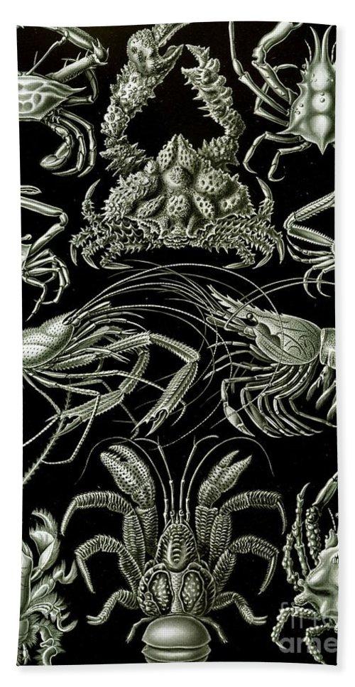 Crustacean Hand Towel featuring the painting Examples Of Decapoda Kunstformen Der Natur by Ernst Haeckel
