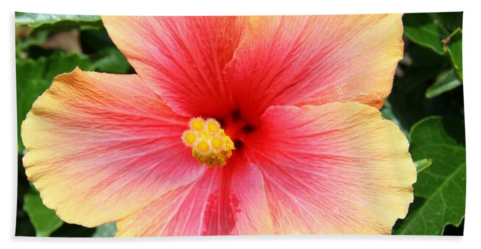 Hibiscus Bath Sheet featuring the photograph Exotic Pride by Christiane Schulze Art And Photography