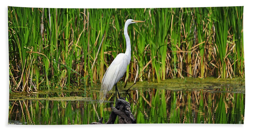 Egret Hand Towel featuring the photograph Exquisite Egret by Al Powell Photography USA