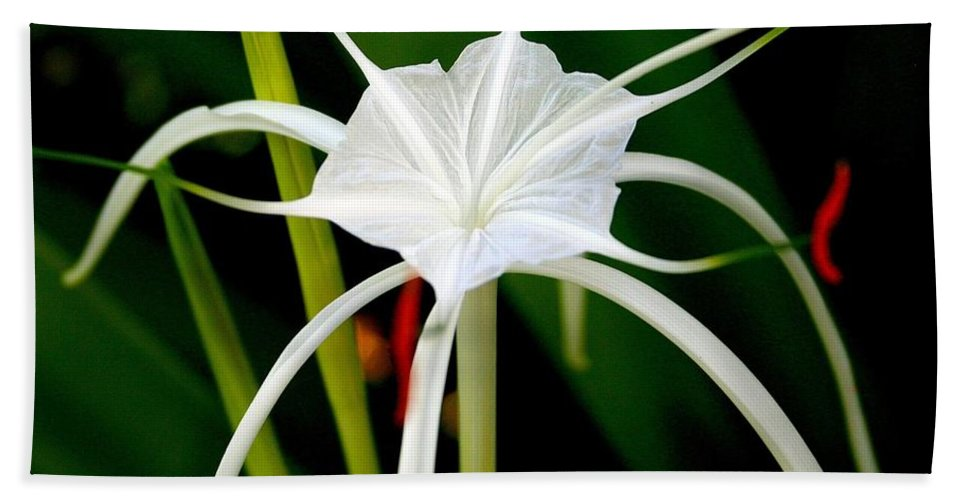 Spider Lily Bath Sheet featuring the photograph Exquisite Spider Lily by Laurel Talabere