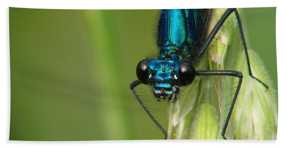 Banded Demoiselle Bath Sheet featuring the photograph Eye Contact by Brothers Beerens