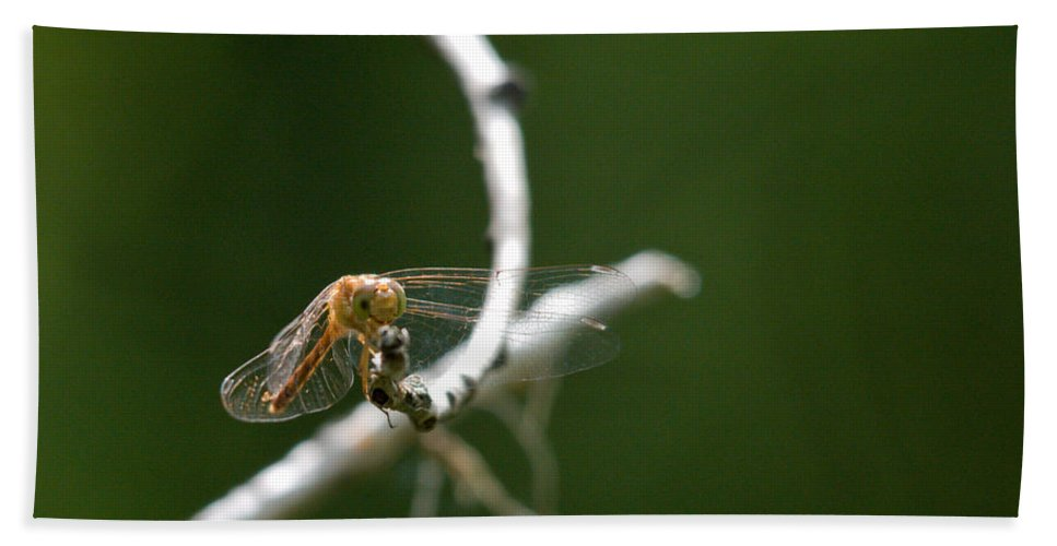 Common Red Darter Hand Towel featuring the photograph Eye To Eye by Cheryl Baxter