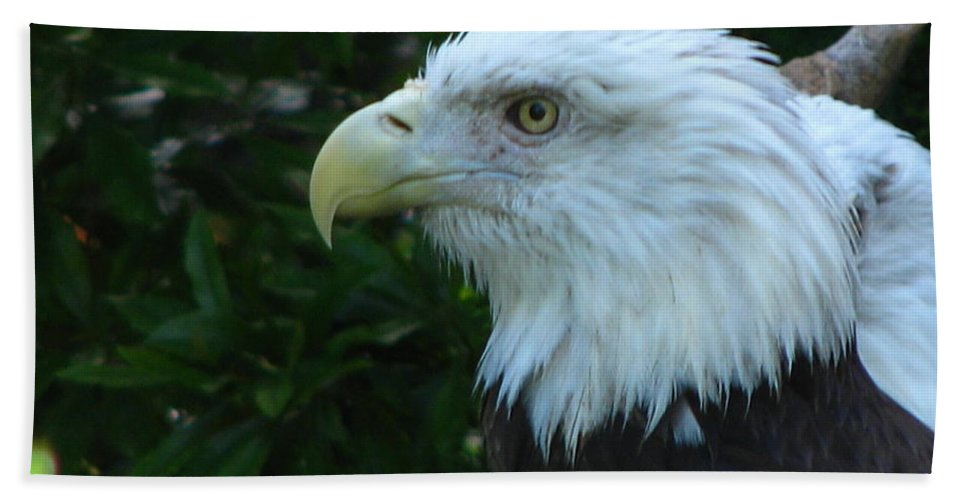 Eagle Hand Towel featuring the photograph Eyecon by Greg Patzer