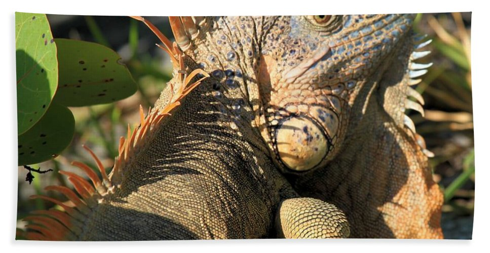Iguana Bath Sheet featuring the photograph Eyeing The Landscape by Adam Jewell