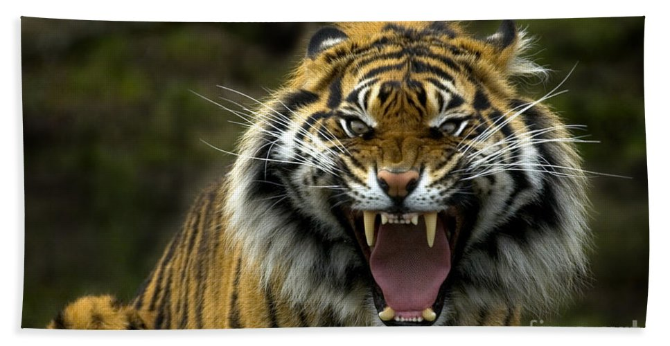 Tiger Bath Towel featuring the photograph Eyes Of The Tiger by Mike Dawson