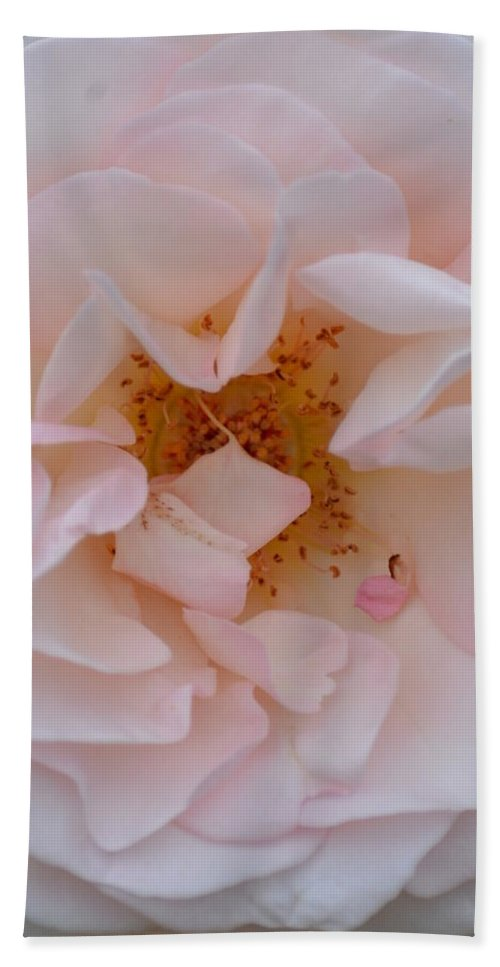 Faintly Pink - Rose Bath Sheet featuring the photograph Faintly Pink - Rose by Maria Urso