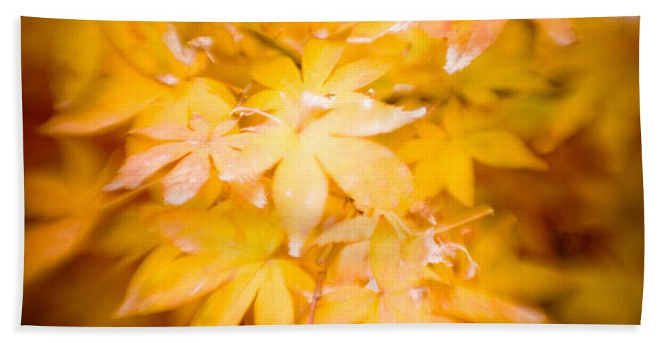 Color Bath Sheet featuring the photograph Fall Colors 6664 by Timothy Bischoff