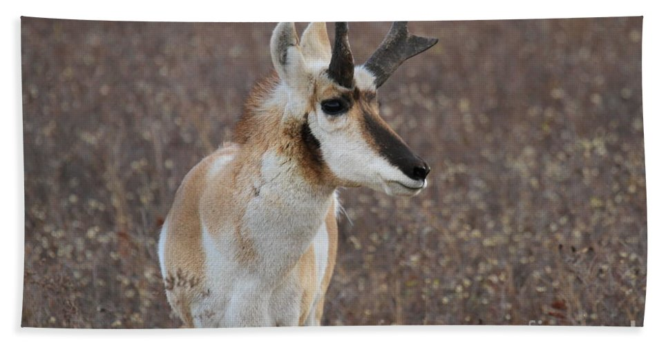 National Bison Range Hand Towel featuring the photograph Fall Colors by Adam Jewell