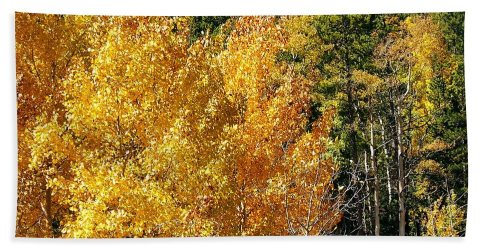 Aspen Bath Sheet featuring the photograph Fall Colors On The Colorado Aspen Trees by Amy McDaniel