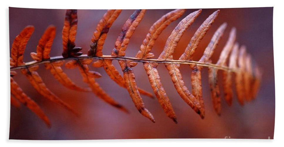 Fall Fern Bath Sheet featuring the photograph Fall Fern by Brothers Beerens