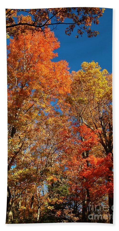 Autumn Hand Towel featuring the photograph Fall Foliage by Patrick Shupert