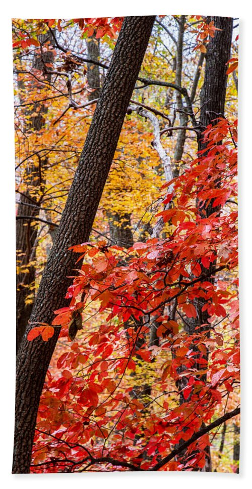 Nc Hand Towel featuring the photograph Fall In The Forest by John Haldane