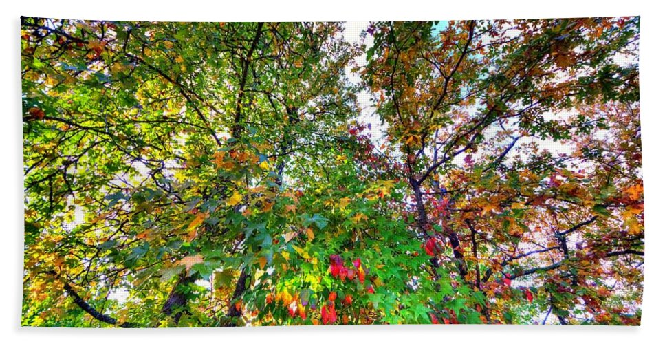 Trees Bath Sheet featuring the photograph Fall Is Here by David Morefield