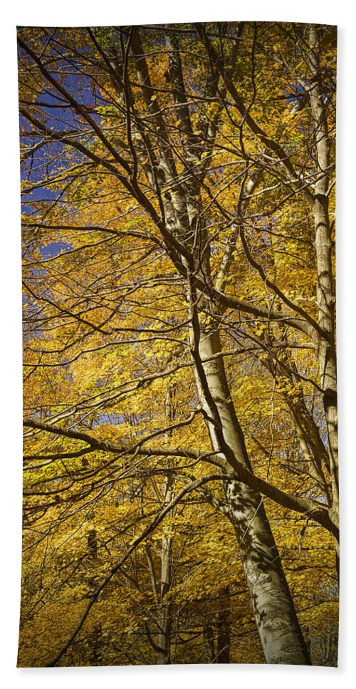 Art Bath Sheet featuring the photograph Fall Leaves And Trees In West Michigan No171 by Randall Nyhof
