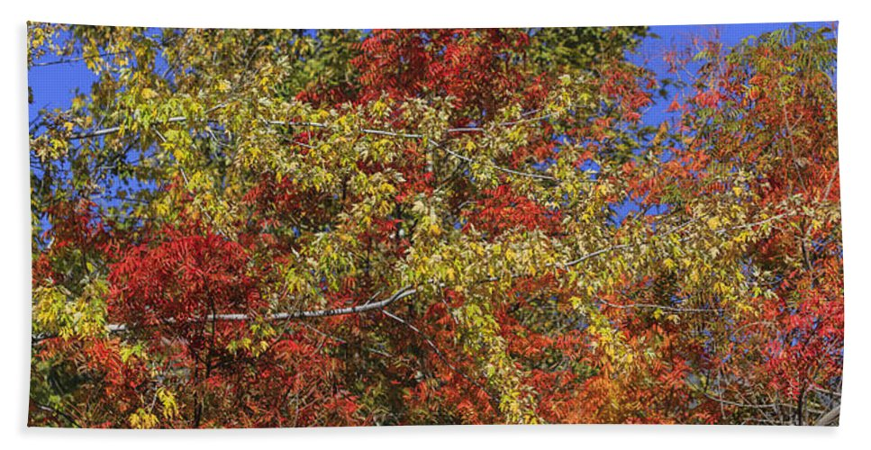 Fall Hand Towel featuring the photograph Fall Leaves In So Cal by Scott Campbell