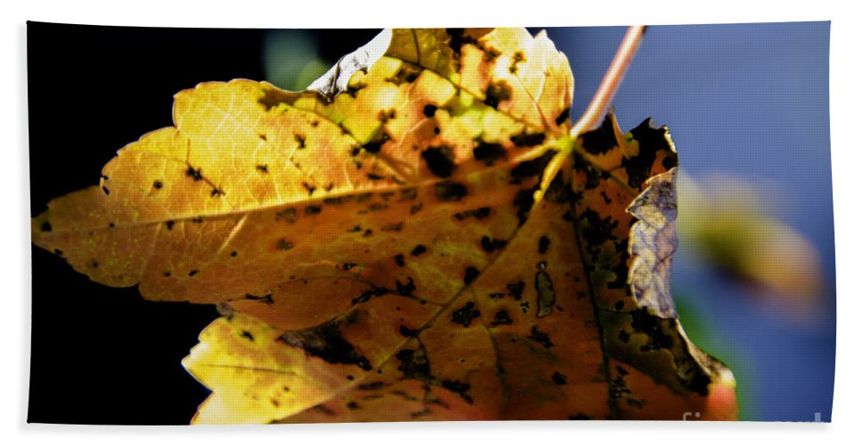 Maple Leaf Bath Sheet featuring the photograph Fall Maple Leaf by Dale Powell