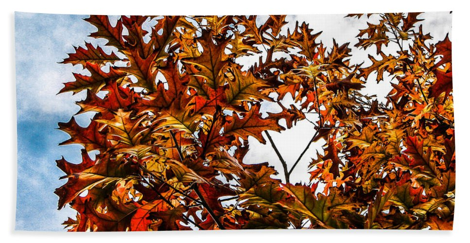 Maple Hand Towel featuring the photograph Fall Maple Leaves by Robert Bales