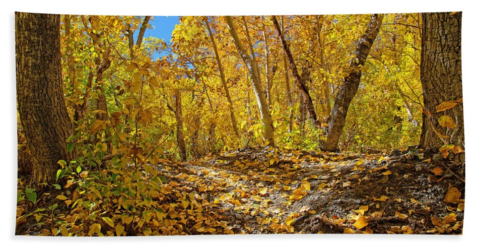 Fall Bath Sheet featuring the photograph Fall On The Forest Floor by Lynn Bauer