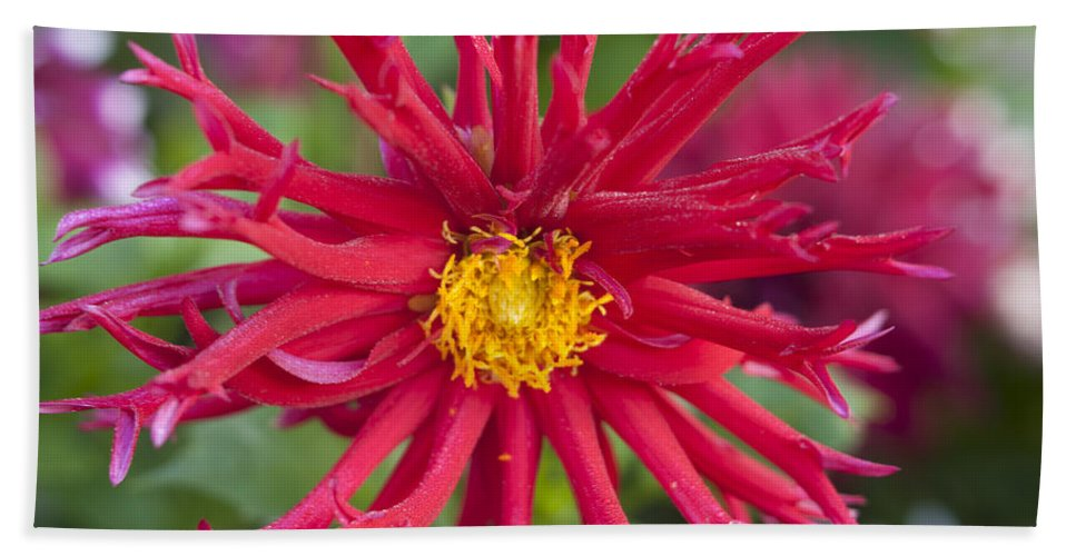 Flowers Bath Sheet featuring the photograph Fall Rains by Miguel Winterpacht