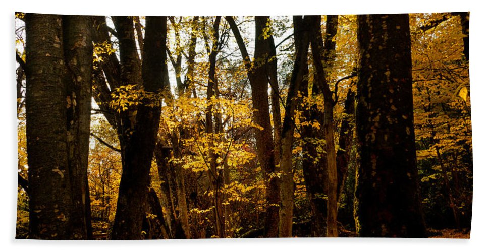 Bidwell Park Hand Towel featuring the photograph Fall Scene In Bidwell Park by Robert Woodward