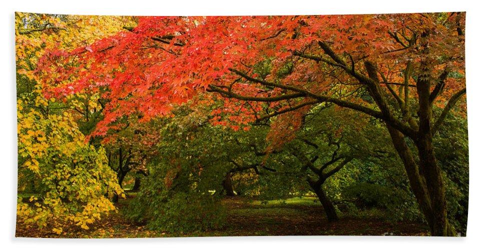 Westonbirt Bath Sheet featuring the photograph Fall Trees by Amanda Elwell