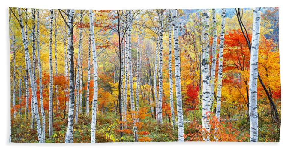 Photography Bath Towel featuring the photograph Fall Trees, Shinhodaka, Gifu, Japan by Panoramic Images