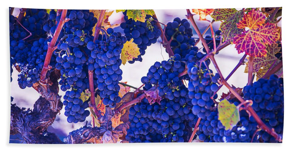 Grapes Bath Sheet featuring the photograph Fall Wine Grapes by Garry Gay