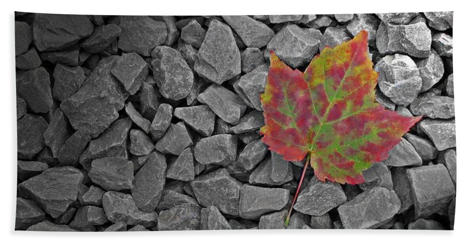 Leaf Hand Towel featuring the photograph Fallen Beauty by David Dehner