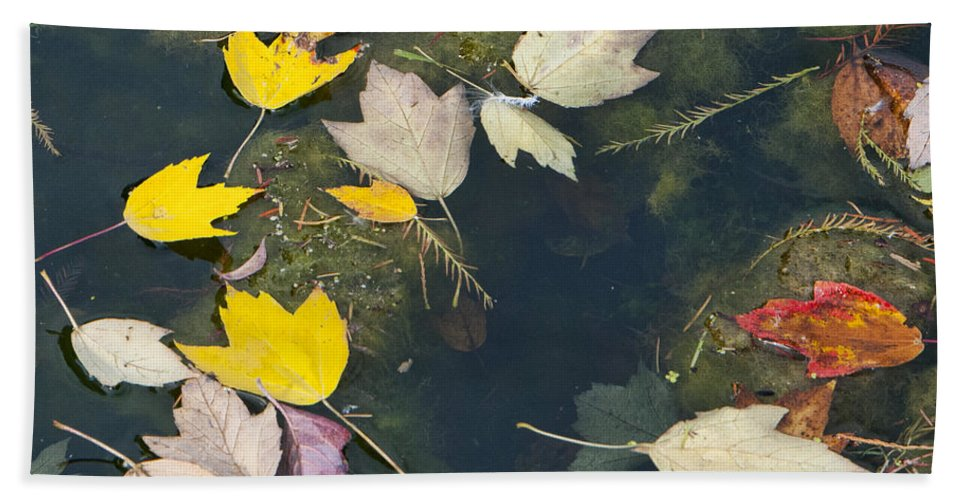 Fallen Leaves 2 Hand Towel featuring the photograph Fallen Leaves 2 by Phyllis Taylor