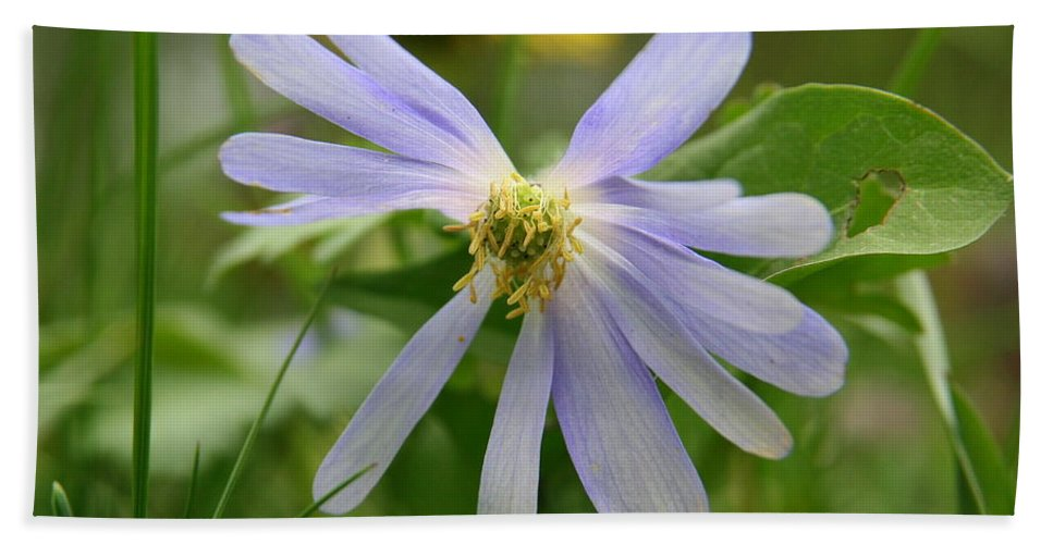 Flower Photography Hand Towel featuring the photograph Fallen Petals by Neal Eslinger