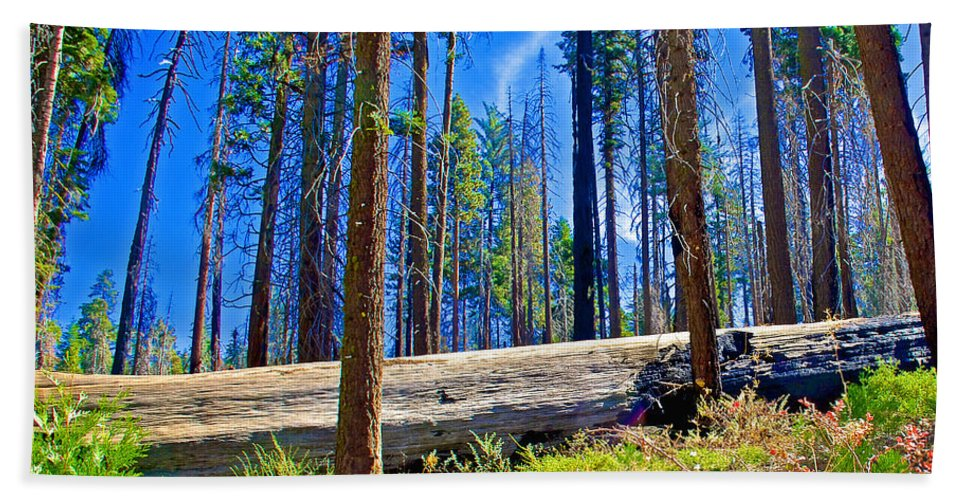 Fallen Sequoia In Mariposa Grove In Yosemite National Park Bath Sheet featuring the photograph Fallen Sequoia In Mariposa Grove In Yosemite National Park-california by Ruth Hager