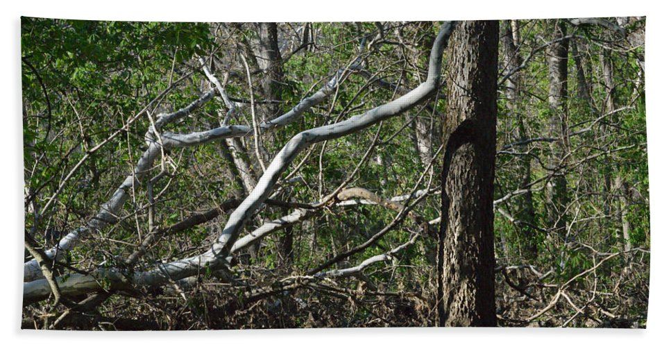 Indiana Hand Towel featuring the photograph Fallen Sycamore by Alys Caviness-Gober