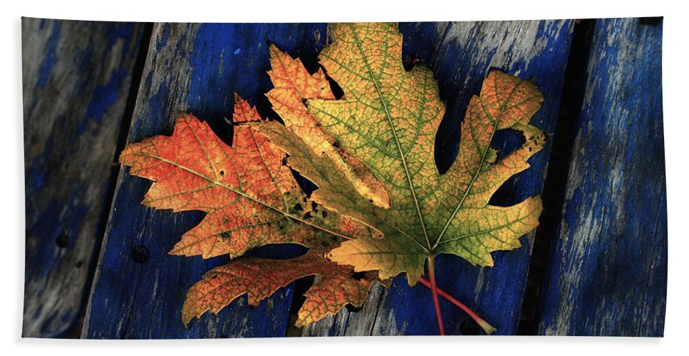 Nature Hand Towel featuring the photograph Falling For Colour by Linda Sannuti