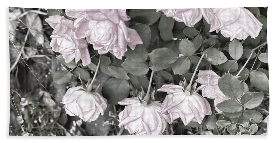 Roses Bath Sheet featuring the digital art Falling Roses by Bonnie Willis