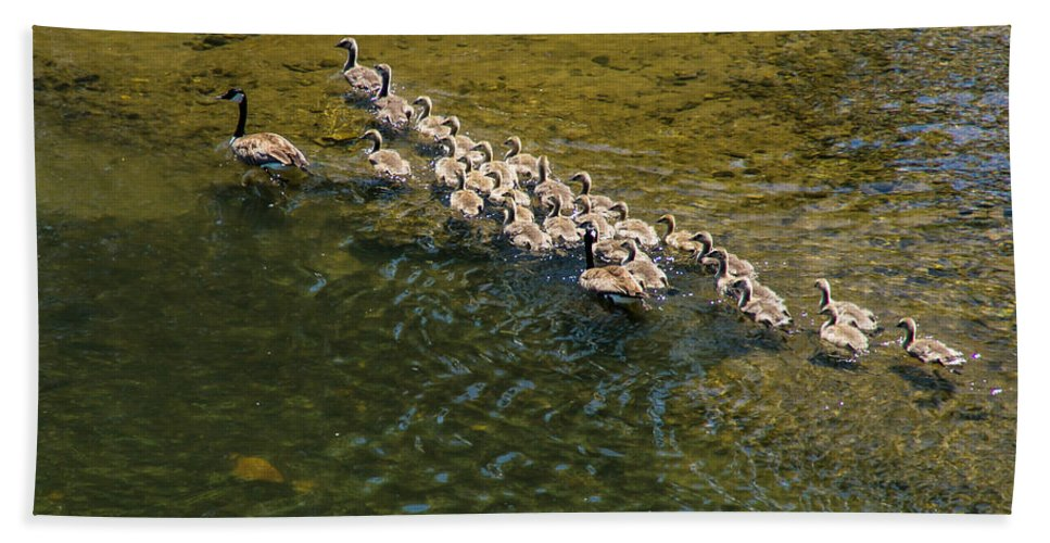 Geese Bath Sheet featuring the photograph Family Of Geese On The Rogue River by Mick Anderson