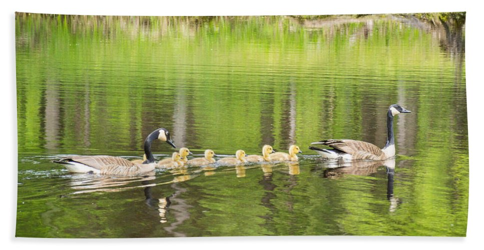 Bird Hand Towel featuring the photograph Family Outing by Bill Pevlor