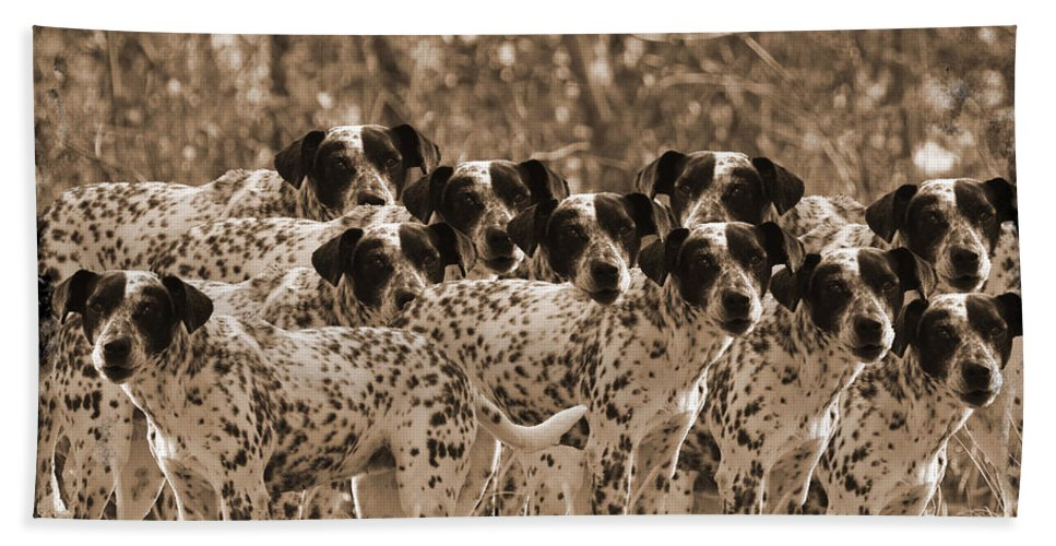 Dog Hand Towel featuring the photograph Family Portrait Before The Hunt-featured Picture In Large Dogs Only Group by Ericamaxine Price