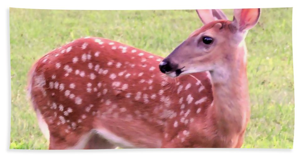 Fawn Hand Towel featuring the photograph Fawn In The Waning Summer by Tami Quigley