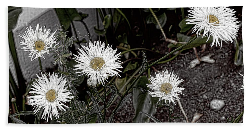 Daisies Hand Towel featuring the photograph Feathered Daisy by Cathy Anderson
