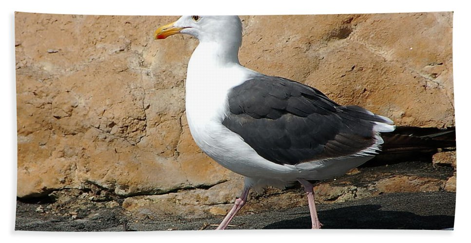 Sea Gull Bath Sheet featuring the photograph Feathered Friend by Jon Berghoff