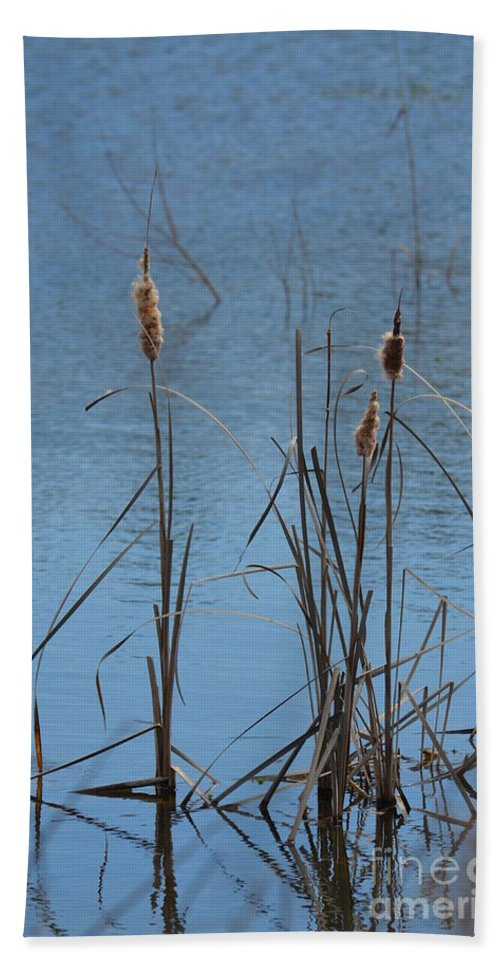 February Cattails Hand Towel featuring the photograph February Cattails by Maria Urso