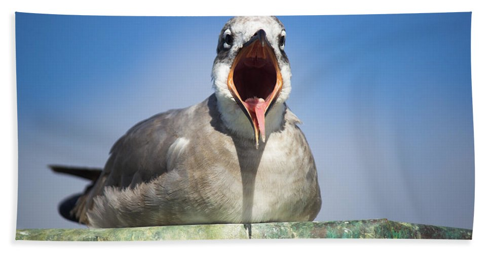 Seagull Hand Towel featuring the photograph Feed Me by Mayra Pau