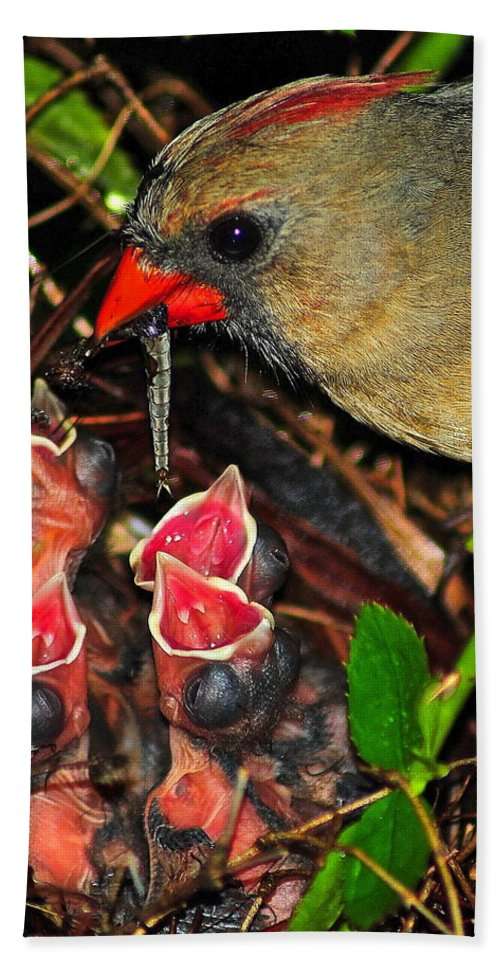 Cardinal Hand Towel featuring the photograph Feed Me Mommy by Frozen in Time Fine Art Photography