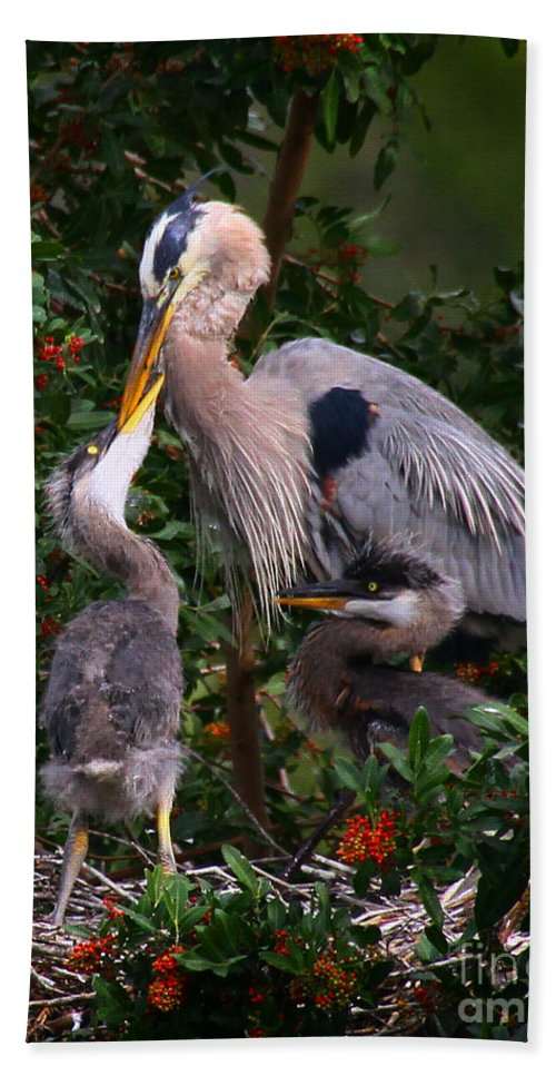 Great Blue Heron Hand Towel featuring the photograph Feeding Time by Barbara Bowen