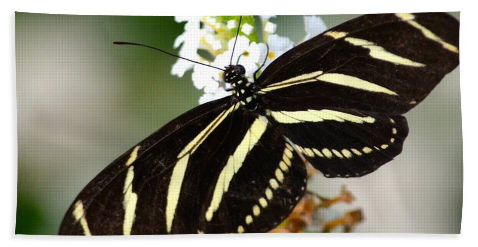 Zebra Bath Sheet featuring the photograph Feeding Zebra Butterfly by Richard Bryce and Family
