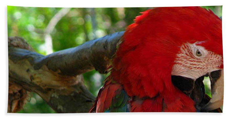 Patzer Bath Towel featuring the photograph Feeling A Little Red by Greg Patzer