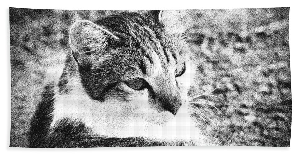 2d Hand Towel featuring the photograph Feline Pose by Brian Wallace