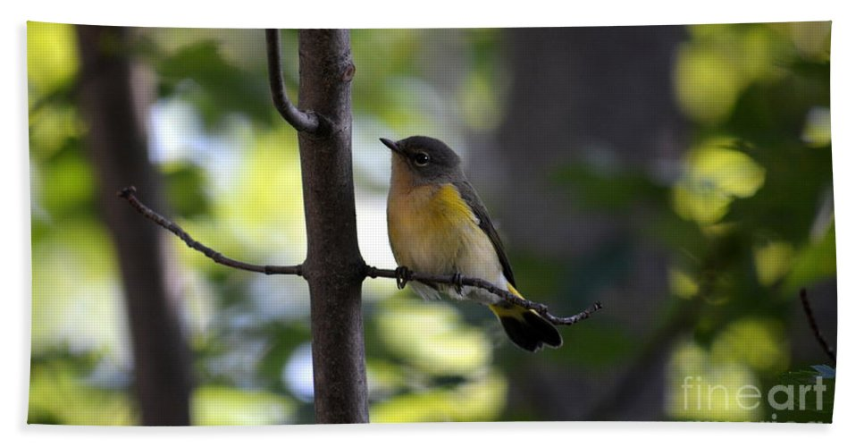 Bird Hand Towel featuring the photograph Undercover by Jaunine Roberts